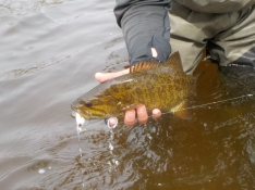 4_29 Smallie Day 3