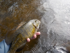 april2017smallie(1st of 2017)